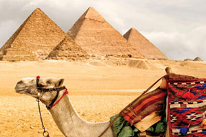 a camel in front of the Great Pyramids